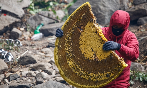 Cliff honey hunting enthusiast helps Yunnan minority escape poverty