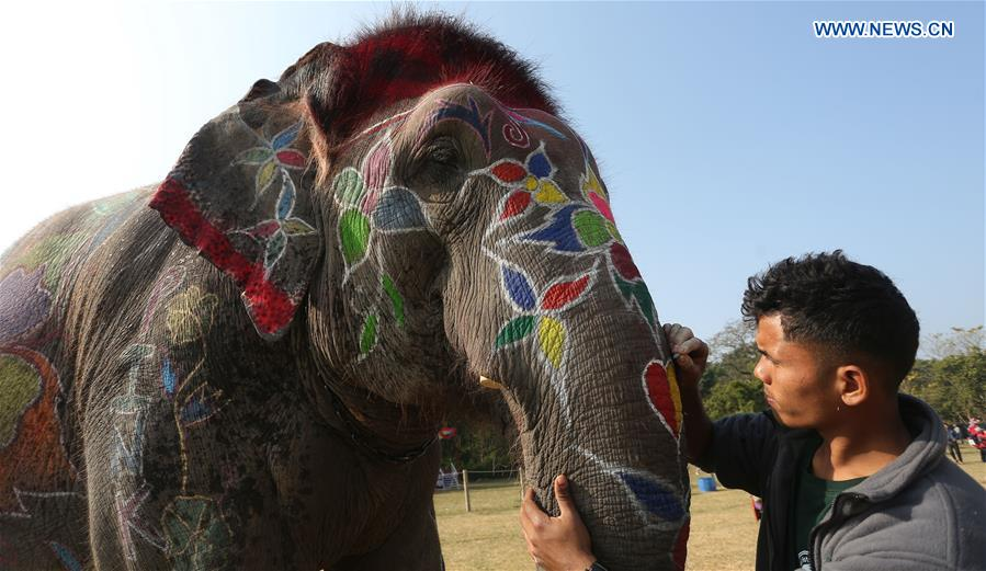 On-spot elephant decoration competition held in SW Nepal's Chitwan district