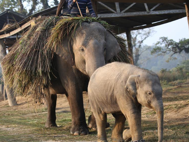 In pics: elephant breeding center at Chitwan National Park in Nepal