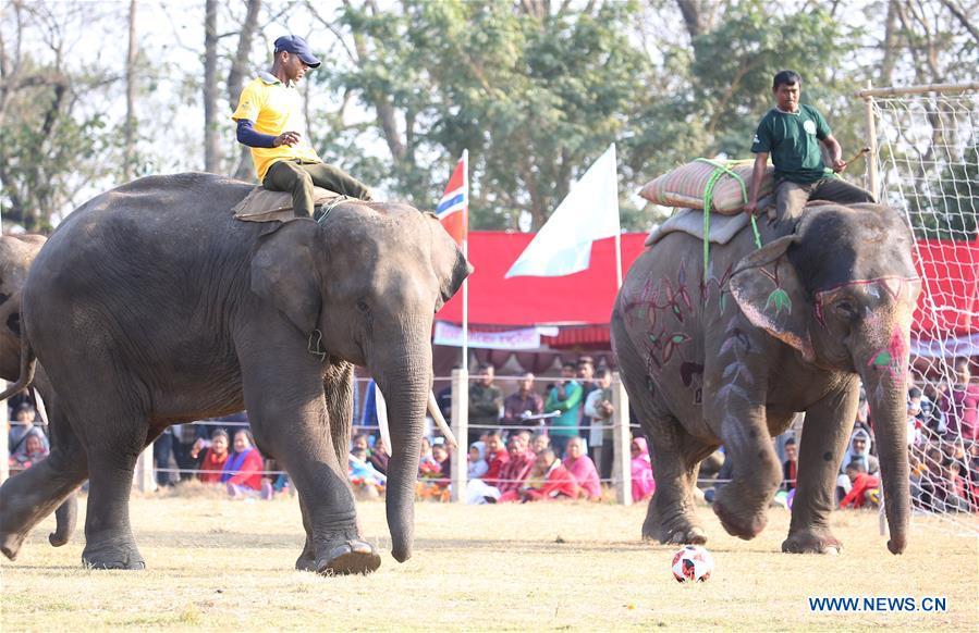Players participate in elephant football game in Nepal