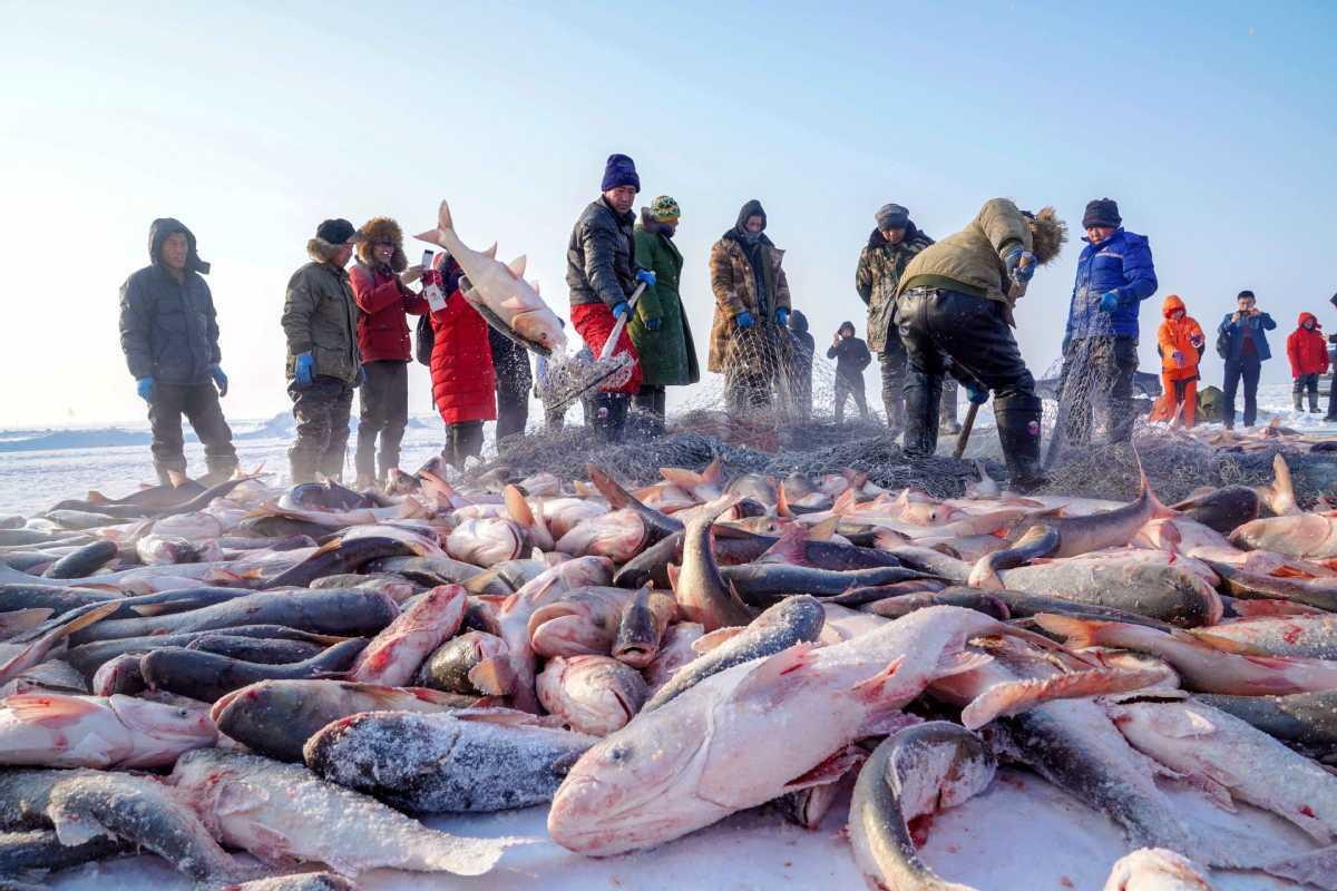 Record 2.96m yuan paid for first catch of winter fishing season