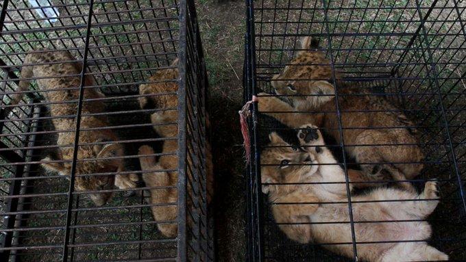 Indonesian police nab smugglers of endangered animals