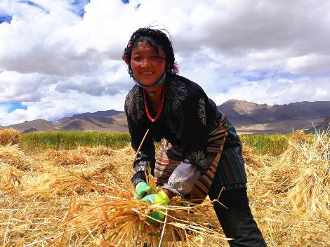 Companies help over 82,000 poor people in Tibet