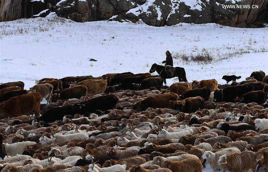 Livestock and poultry gene bank to be established in Xinjiang