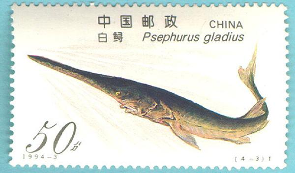 Chinese paddlefish in Yangtze River declared extinct