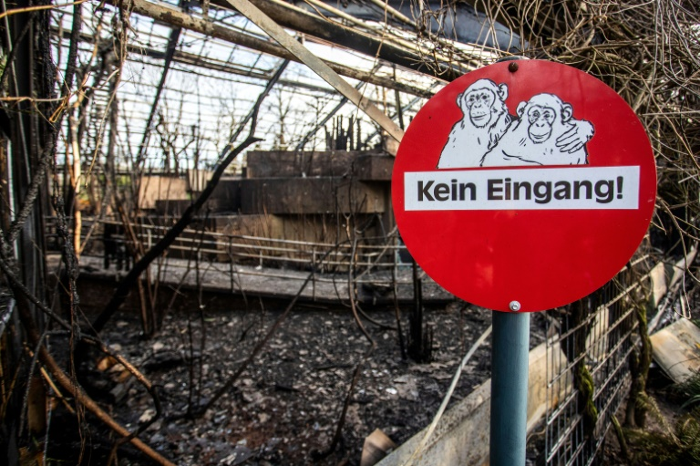 Mother and daughters investigated over German zoo fire
