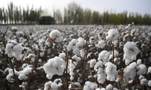 Xinjiang continues to top China's cotton production