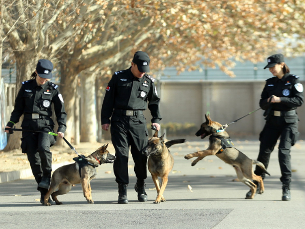 When one top police dog isn't enough