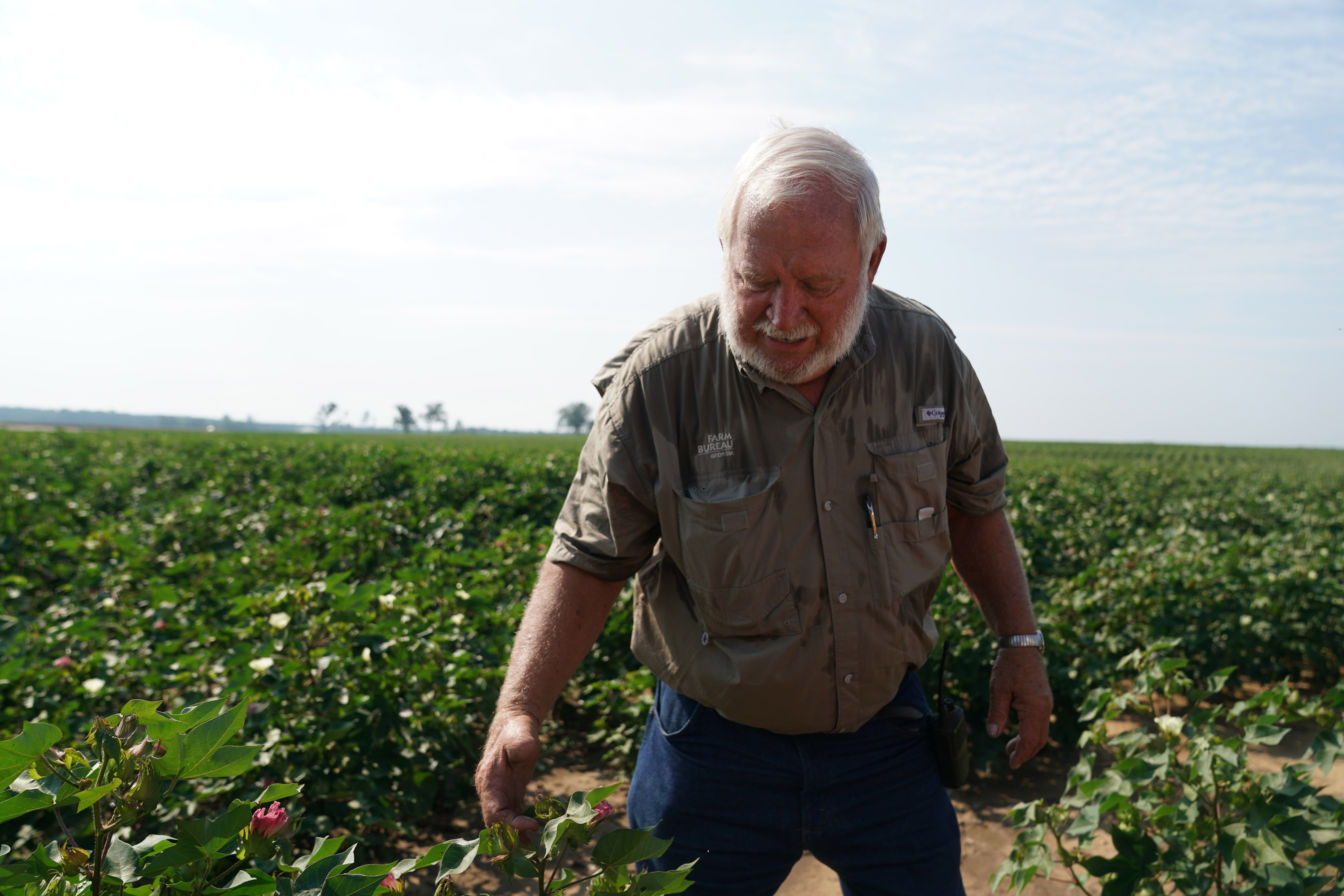 Struggling to profit from cotton, US farmer counts on trade deal with China