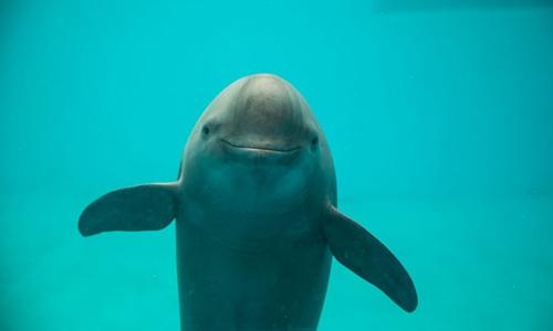 China races to rescue rare Yangtze finless porpoise