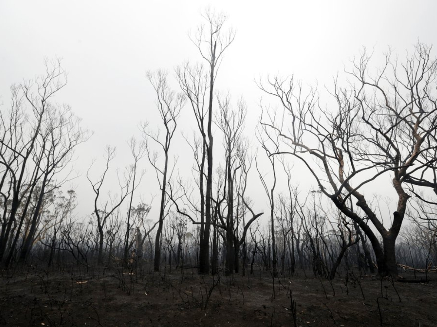 2 more missing in Australian wildfires as rain brings relief