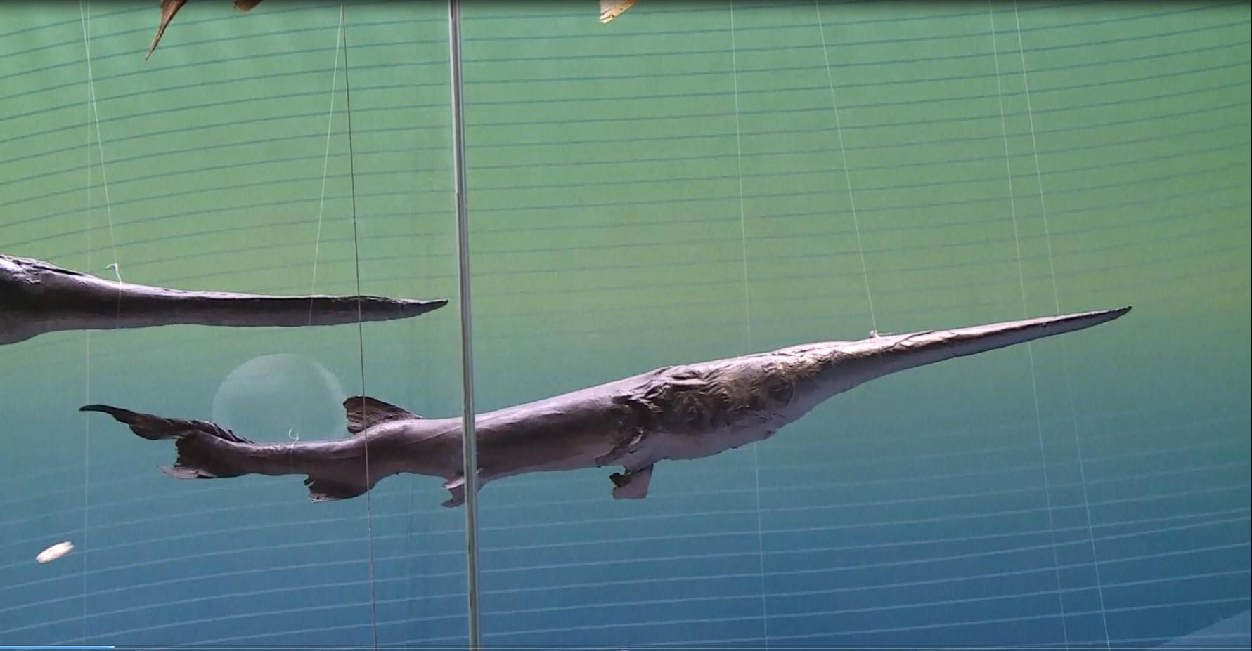As scientists declare the Chinese paddlefish extinct, here are some other animals that have vanished