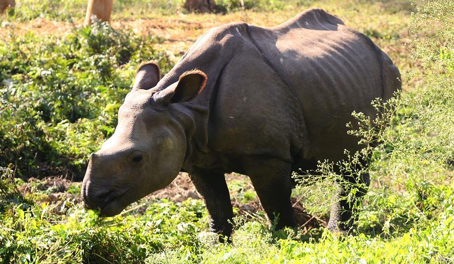 Nepal's Chitwan National Park records first rhino death of 2020