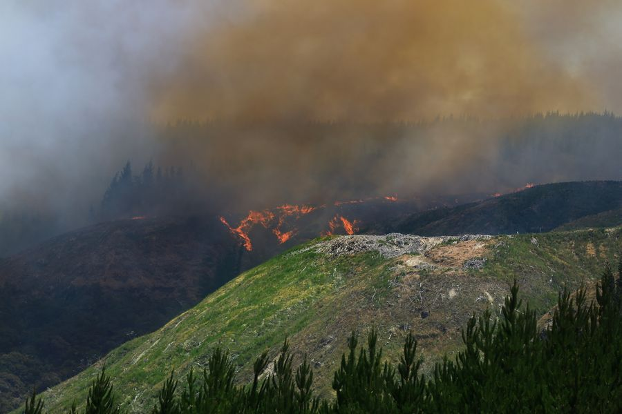 New Zealand forest fire continues
