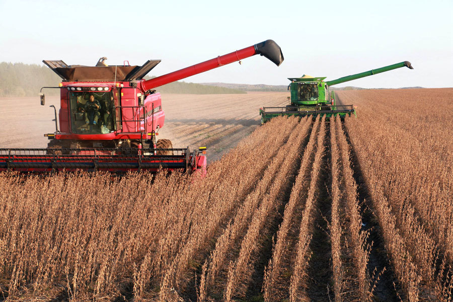 Northeast China province beefs up soybean production