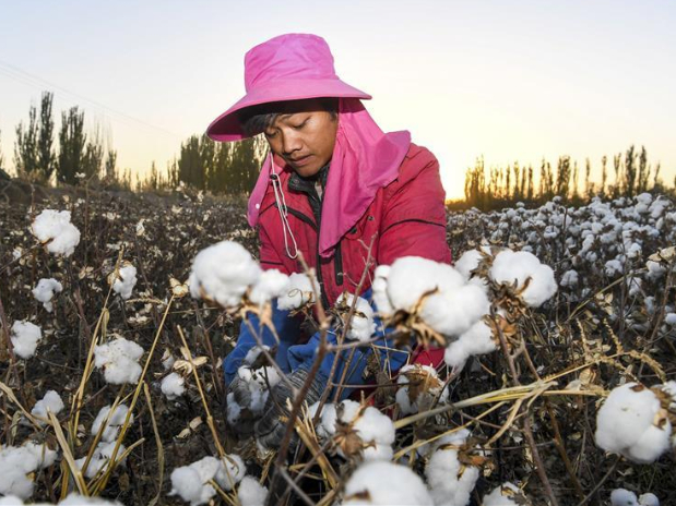 Xinjiang still China's largest cotton producer in 2019