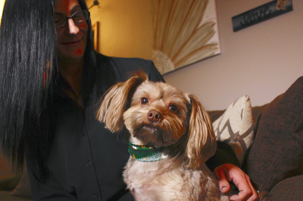 Researchers: Some pet products touted as CBD don't have any
