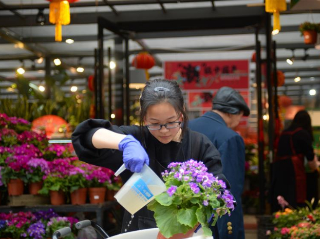 Flowers, green plants become popular as Spring Festival draws near