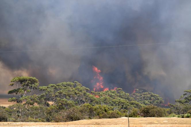 PM flags 'comprehensive' inquiry into Australian bushfires