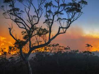Australia fires 'long way from over' but rain brings relief