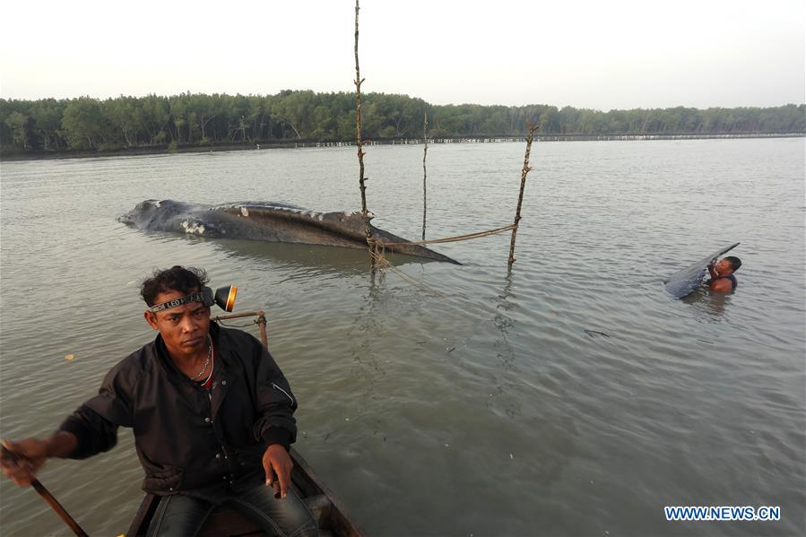 Fishermen check dead sperm whale stranded at Asahan River in Indonesia