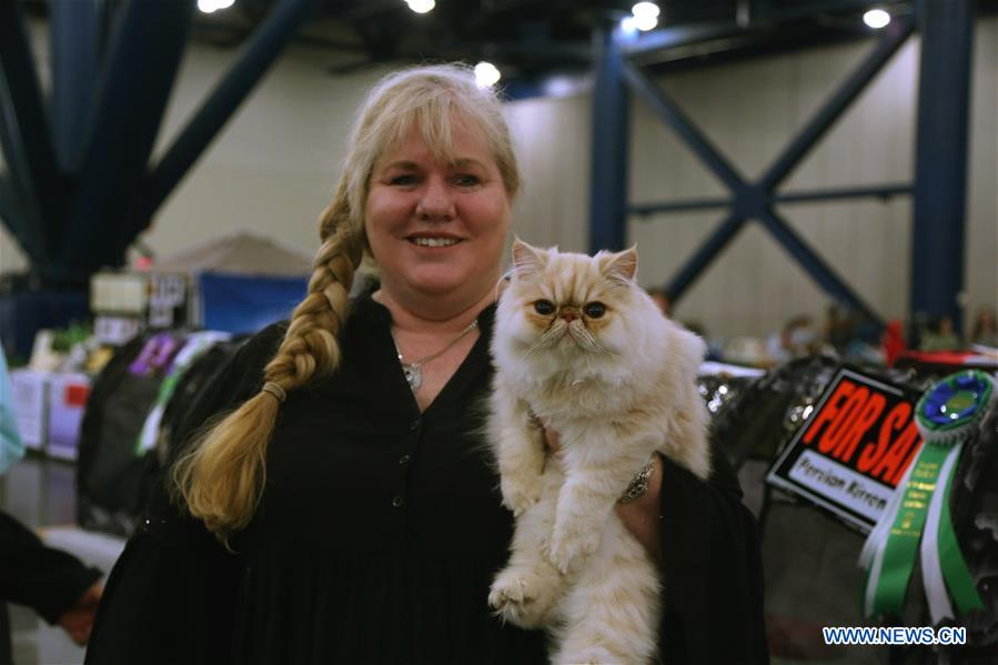 Houston Cat Club Annual Charity Cat Show held in Texas, U.S.