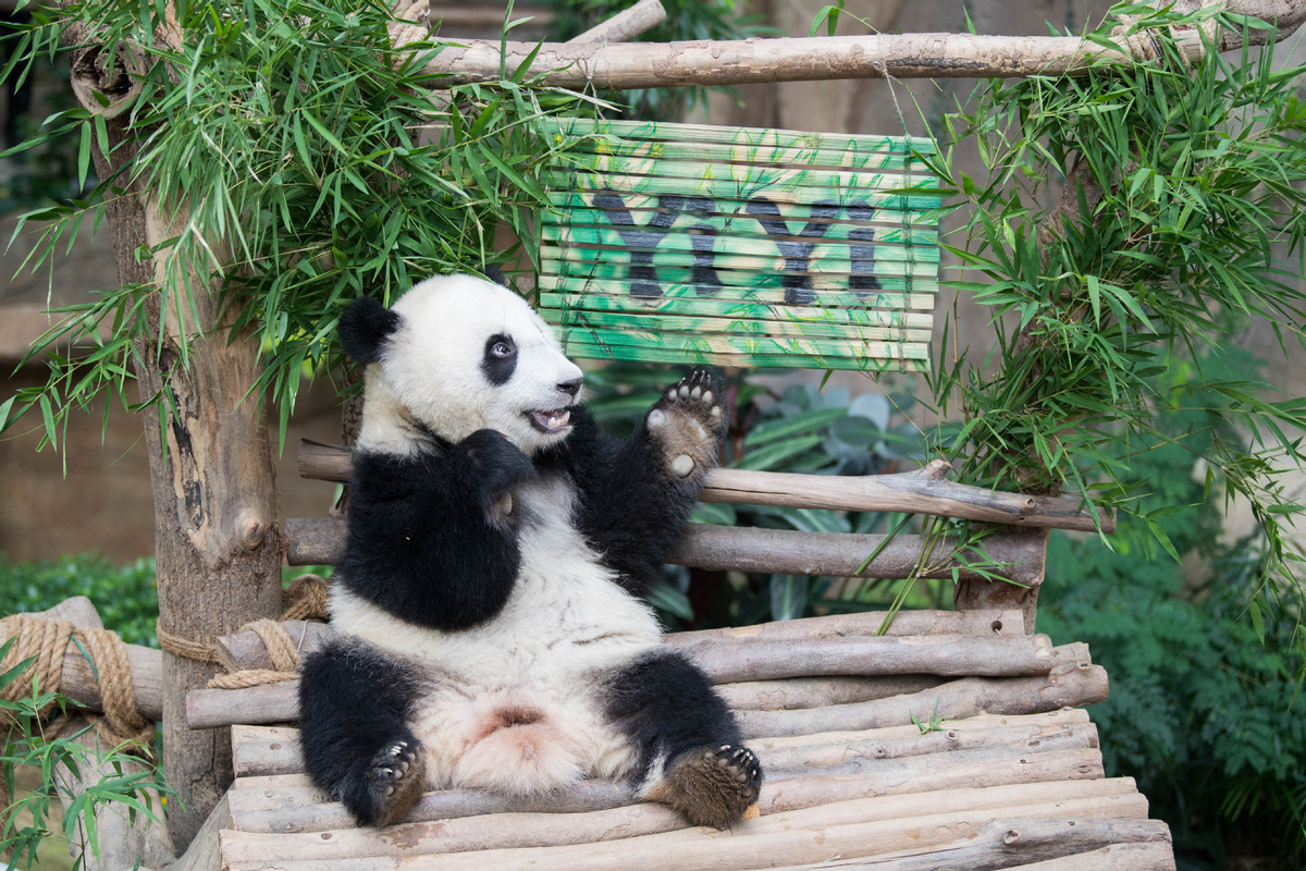 Giant Panda 'Yi Yi' celebrates second birthday in Malaysia