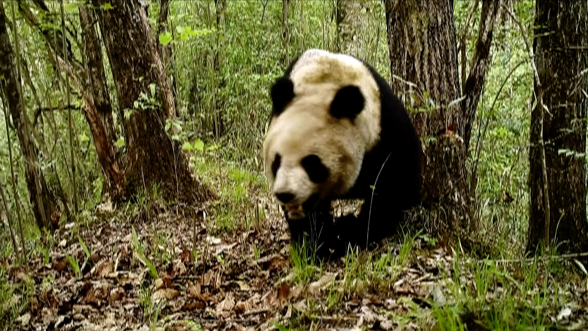 Rare wild animals captured on camera in NW China nature reserve