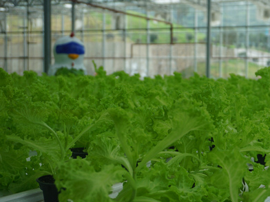 China's Guizhou to promote smart vegetable farms