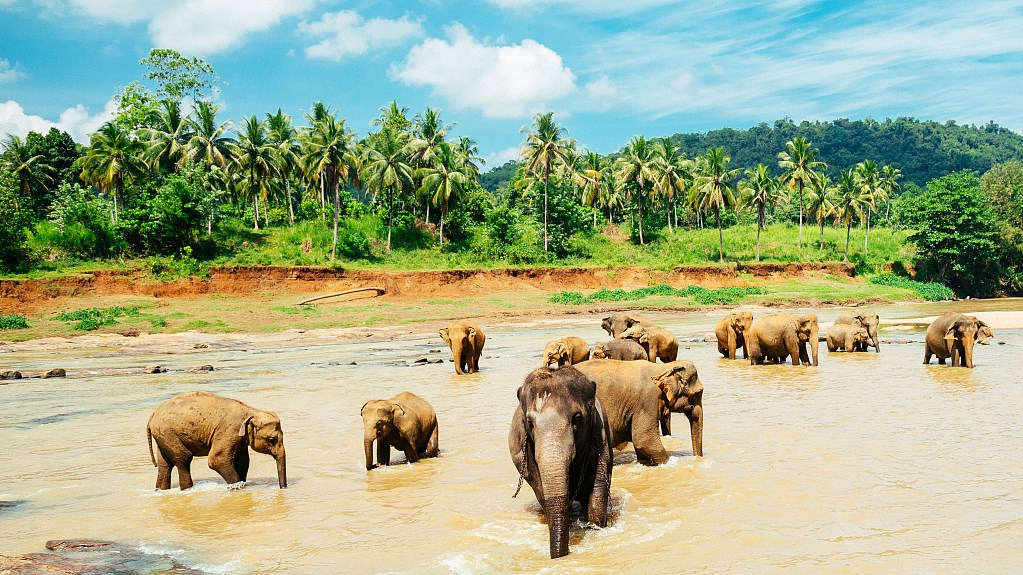 Sri Lanka to deploy civil defense personnel to resolve human-elephant conflict