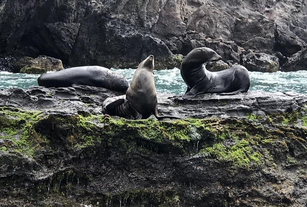 San Francisco celebrates 30th anniversary of sea lions arrival to city