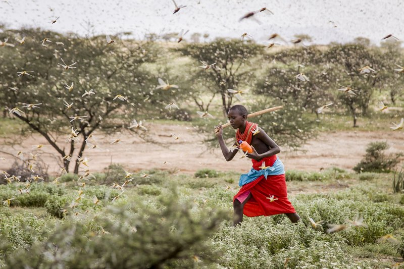 Locust hits East Africa, most serious in 25 years