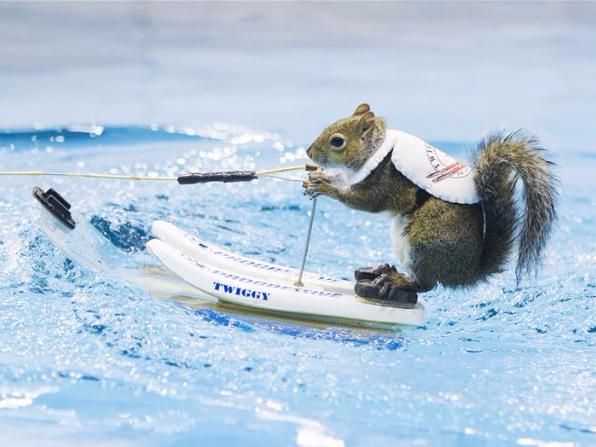 Squirrels perform water-skiing in Toronto