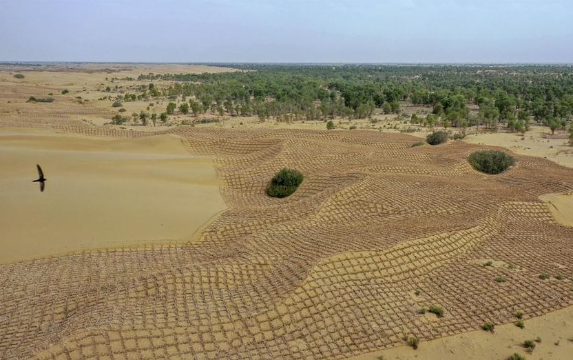 China steps up fight against desertification in 2019