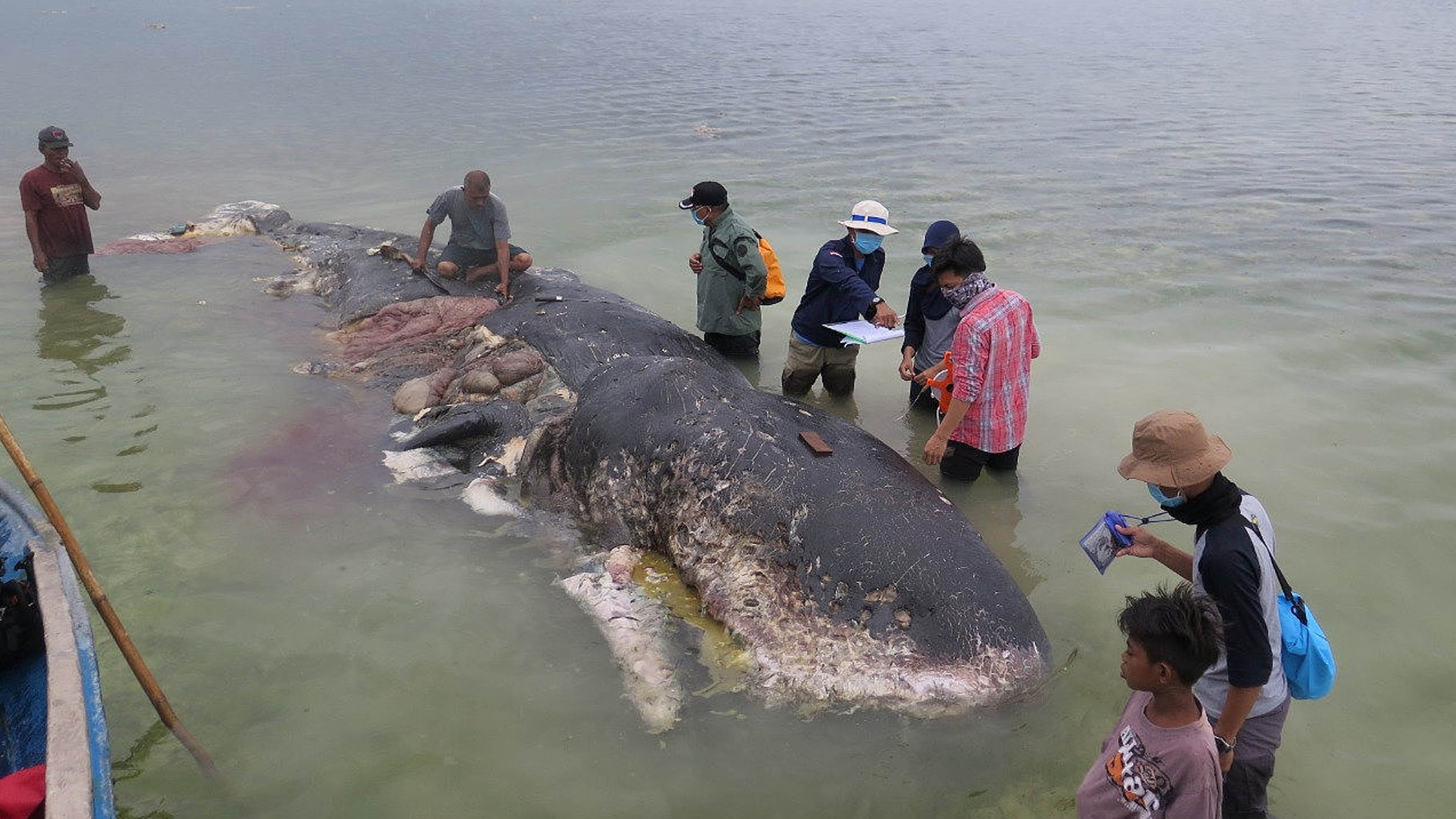 Whale dies after being stranded in central Indonesia