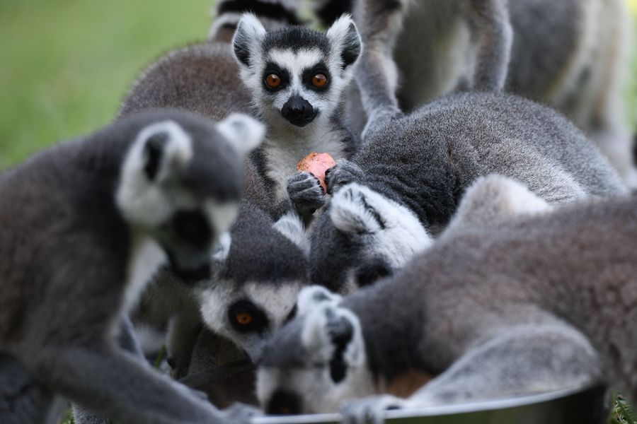 China suspends wildlife trade to curb novel coronavirus