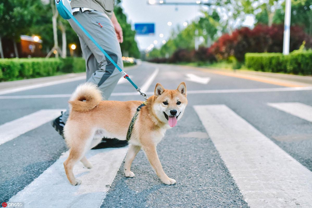 Keep pets away from coronavirus sources