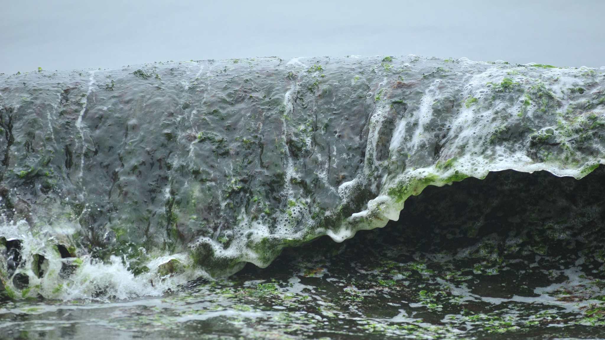 China develops harmless treatment method of blue algae