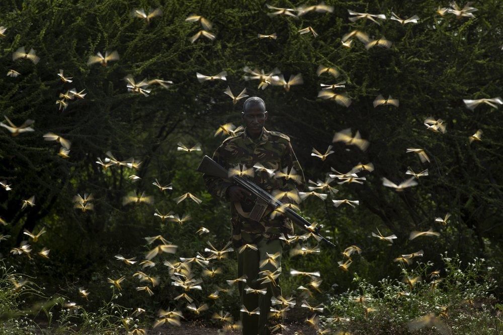 Spray planes combat the huge locust outbreak in East Africa