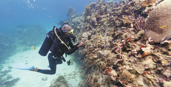 When reef ecosystems fail to recover