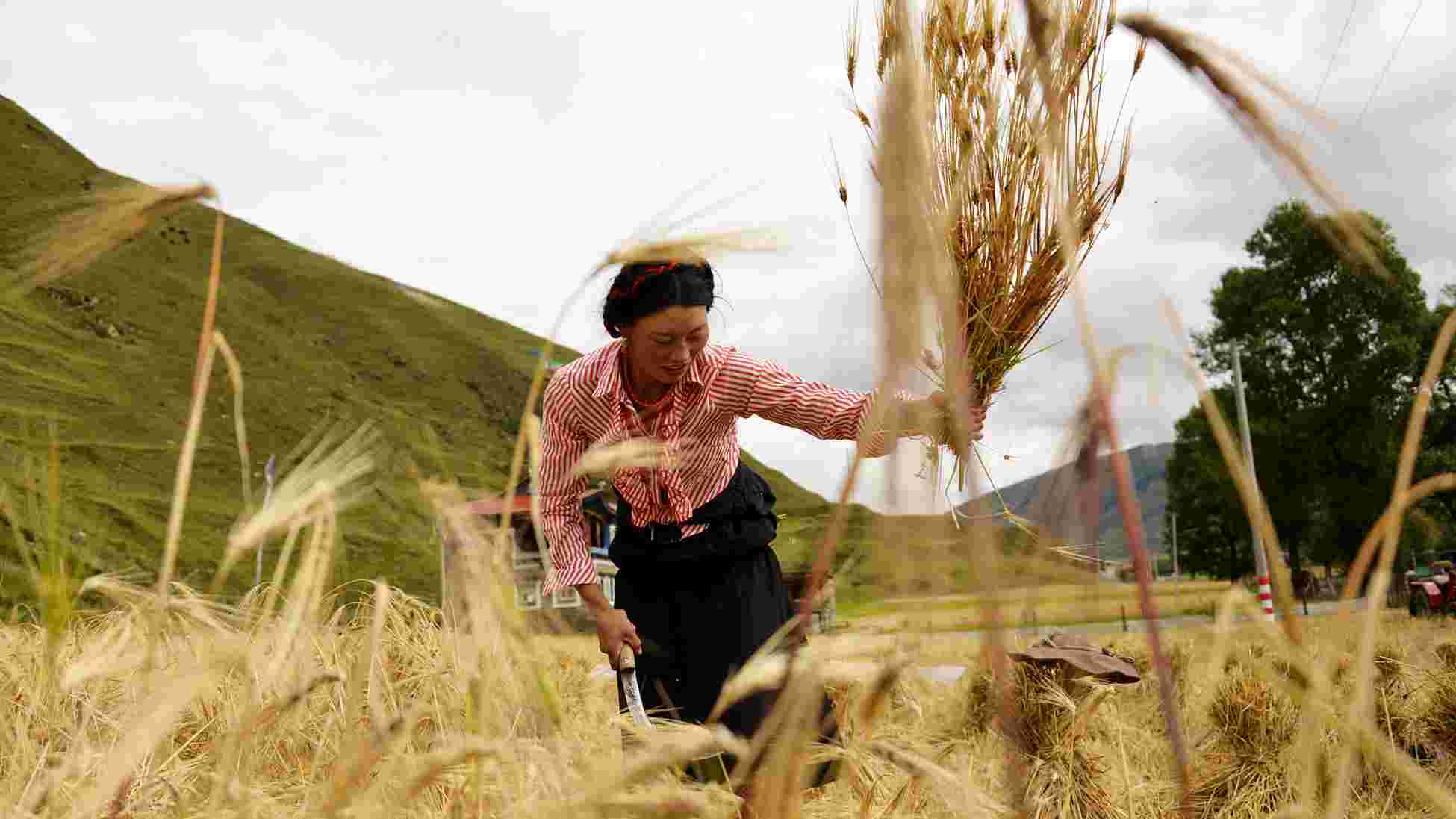 China's No. 1 central document prioritizes poverty relief, improving rural weak links