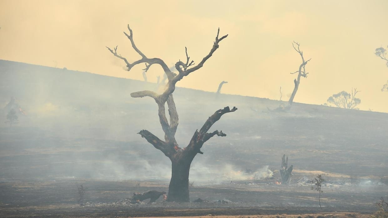 Rains 'breaking the back' of Australia bushfire crisis