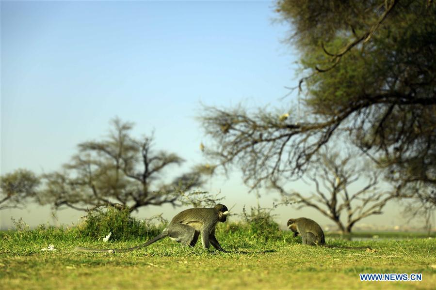 Scenery of al-Sunut Forest in Khartoum, Sudan