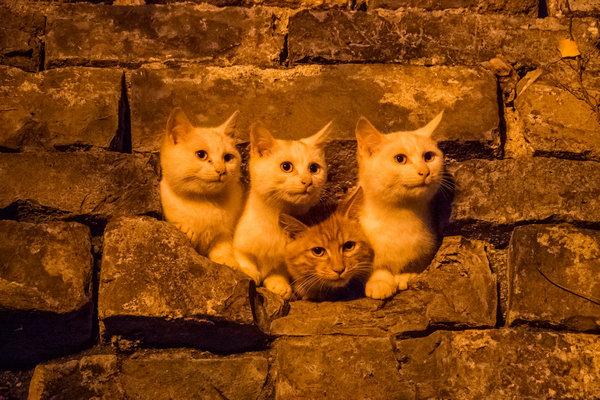 In the Forbidden City and beyond, the life of cats