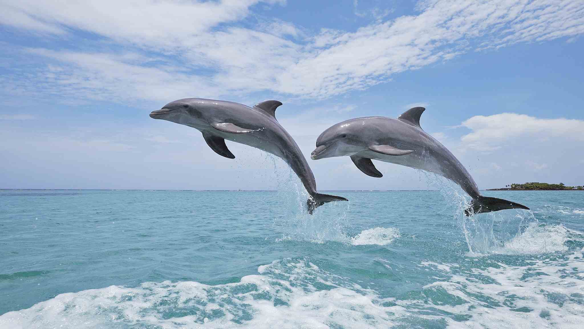 Dolphins form social circles based on similar reproductive status: Study