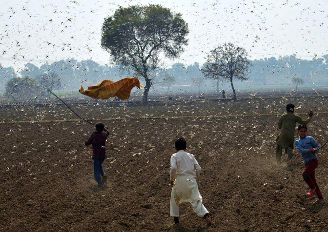Desert locusts spread to South Sudan