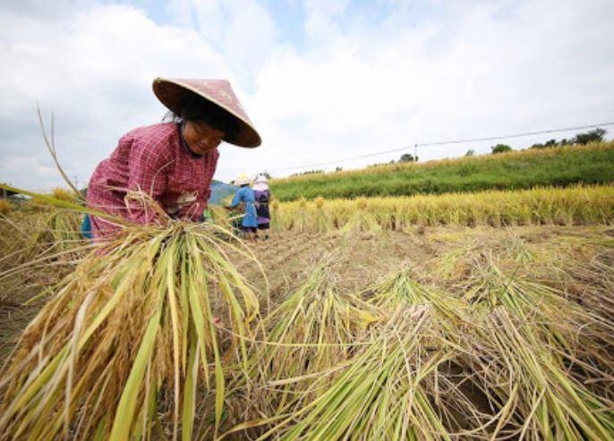 farmers (xinhua).jpg