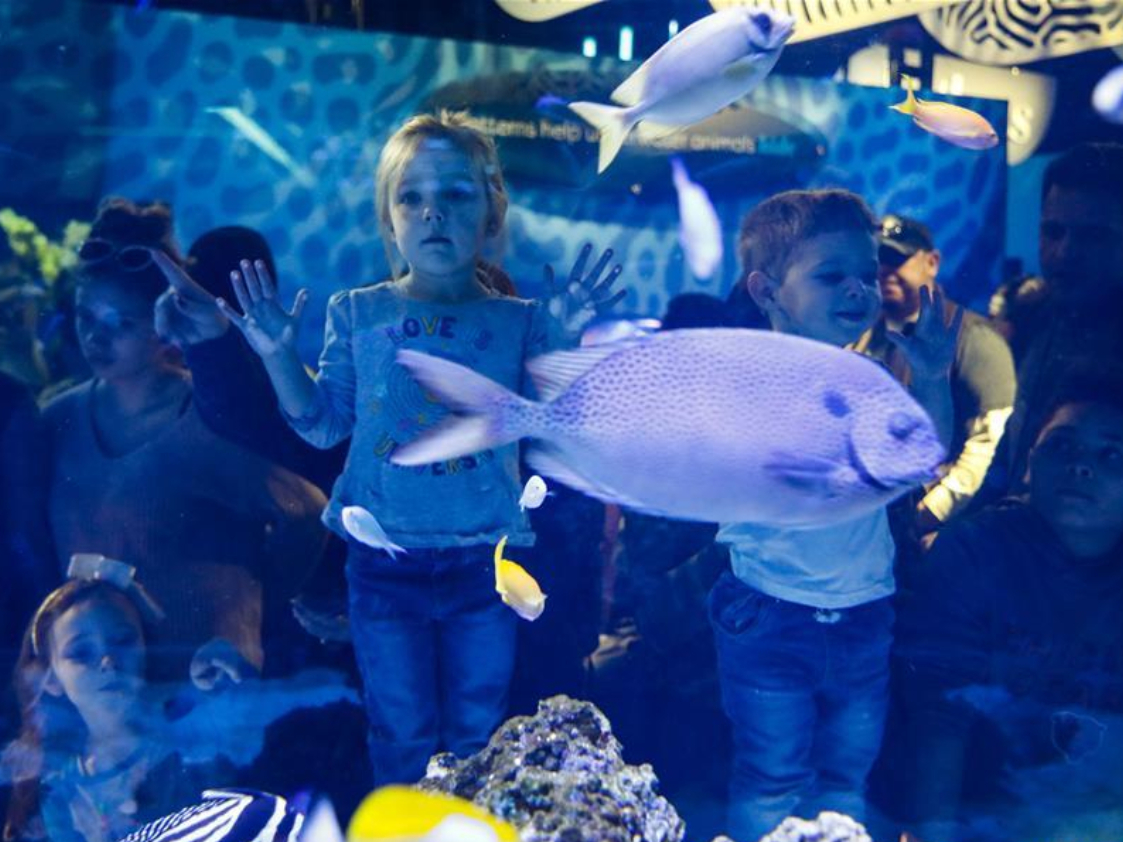 People visit Underwater Beauty exhibit at Shedd Aquarium in Chicago