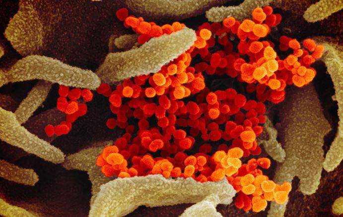 coronavirus (sciencemag.org).jpg