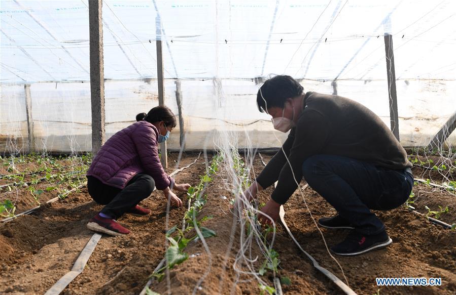 Villagers work in fields in Henan